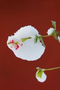 雪だるま - 写心食堂