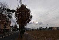 薄雲と落ち葉 - ひのきよ