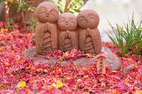 鎌倉・長谷寺の紅葉 - エーデルワイスPhoto