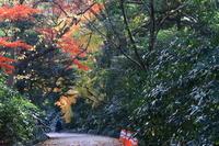 水仙と紅葉新宿御苑 - お散歩写真     O-edo line