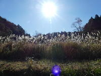 さらに冷え込む二日目 - 千葉県いすみ環境と文化のさとセンター