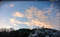 真っ白な朝、赤のゼラニウム - どんぐりの木の下で……