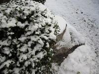 ~~とうとう初雪~~ - 拝啓 よねこさま