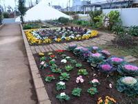 マンション花壇ちょこちょこ足して冬花壇完成 - ニッキーののんびり気まま暮らし