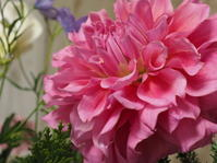 ダリアの花束 - グリママの花日記