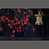 枝垂れ桜の紅葉 - HIGEMASA's Moody Photo