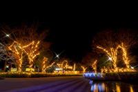 光り輝く蓮華寺池公園(2) - やきとりブログ