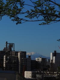 月と星と富士山と。 - green floral (旧green diary)