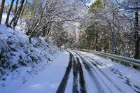雪の朝の散歩 - 宮里龍治アトリエ
