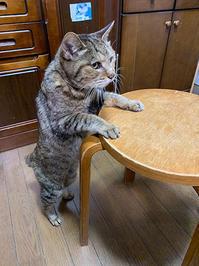 おそいなあ - ぶつぶつ独り言2(うちの猫ら2021)