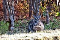 植え込みの陰でウサギさん。お堀で水飲みノツグミたち - ぶらり散歩 ~四季折々フォト日記~