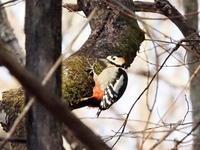 野鳥の森にいたアカゲラ - コーヒー党の野鳥と自然パート3