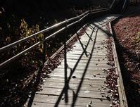 稲荷山公園朝の光と影 - ひのきよ