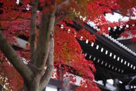 鎌倉長谷寺3 - 生きる。撮る。