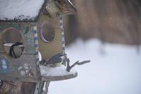 野鳥食堂、営業始めました - ときどきの記 from 小樽