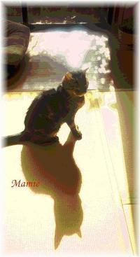 Happy Caturday♪ - おだやかに たのしく Que Sera Sera