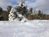 大雪 クリスマスソングLet it snow - NYからこんにちは