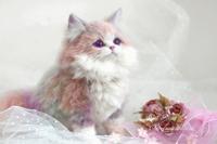 """【2012181】アートドール「スィートキャンディ」子猫 - 羊毛フェルト """"うちのコ""""オーダー出来ました"""