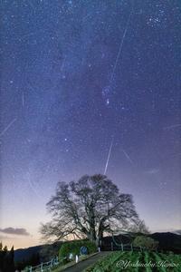 醍醐桜とふたご座流星群 - 写真ブログ「四季の詩」