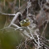 キバラガラ - 打出頑爺の鳥探し