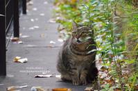 Happy Caturday -11月に出逢った子- - It's only photo 2