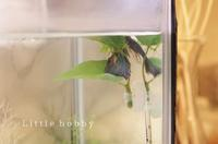 """ベタ水槽浮き草あきらめる~おすすめは人工水草の""""ベタのおやすみリーフ"""" - Little hobby"""