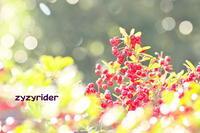 あかい珠、しろい珠 - ジージーライダーの自然彩彩
