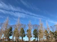 冬の秋留台公園 - ヒビノコト。