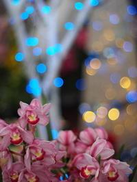新潟県立植物園のクリスマス - MPG