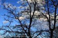 冬支度 - 風の彩りー3