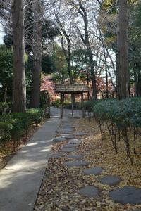 荻窪大田黒公園  (2) - M8とR-D1写真日記
