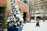 自宅周辺は積雪25㎝ - 照片画廊