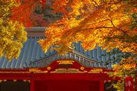 鎌倉の紅葉2020の後半 - エーデルワイスPhoto
