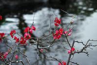 鎌倉長谷寺5 - 生きる。撮る。