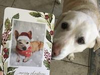 ペブルからのクリスマスカード - ちょっと田舎暮らしCalifornia