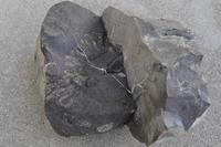 化石いぢり(15) - ふぉっしるもしてみむとてするなり