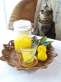 庭の柚子で柚子茶を♪ - キッチンで猫と・・・