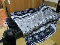 愛犬ラッキーへのプレゼント - 月の光 高原の風 かなのブログ