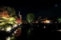 秋の京都 バスツーリング4 東寺 - Photograph & My Super CUB110 【しゃしんとスクーター】