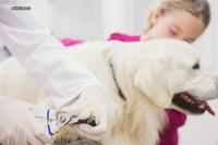 この国では、ペットの健康グッズは、先手を打つ必要がある消費財、つまり消費者の需要があるものにしか該当しません。 - 關注美容推介 掌握美容產品新動向