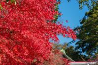 鎌倉宮の紅葉2020 - エーデルワイスPhoto