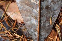 葉っぱの中の木 - お山遊び