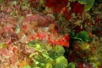 20.12.22また、数日振りの晴れ間! - 沖縄本島 島んちゅガイドの『ダイビング日誌』