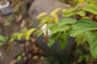 「咲き残るシモバシラを見ると」 - もるとゆらじお