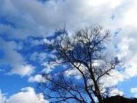 寒い冬の楽しみは? - 千葉県いすみ環境と文化のさとセンター