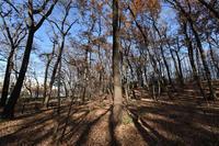 中里保存林12月 - ひのきよ