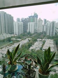 30年間の街建設-今日から風の時代の始まり始まり - HanaHana Selection