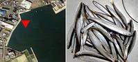 2020.12.22  小樽港北浜岸壁のチカ釣り13:30〜19:30 - たどり着いたら、いつもチカ釣り