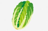 【驚愕】白菜さんコロナのせいで5玉100円まで値下がりしてしまう… - フェミ速