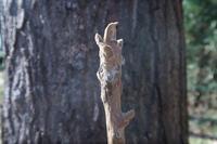 ■冬芽・葉痕オニグルミほか20.12.23(オニグルミ、クサギ、ガマズミ) - 舞岡公園の自然2